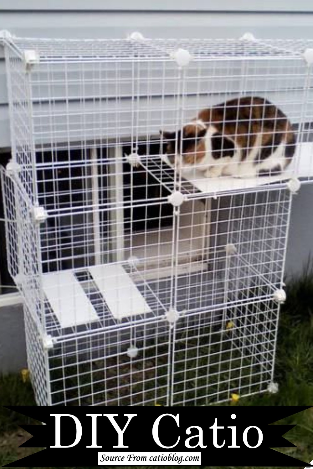 Beautiful cage for cat's playstation