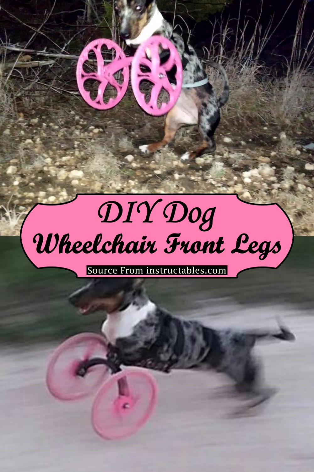 Front Legs Wheelchair for your canine