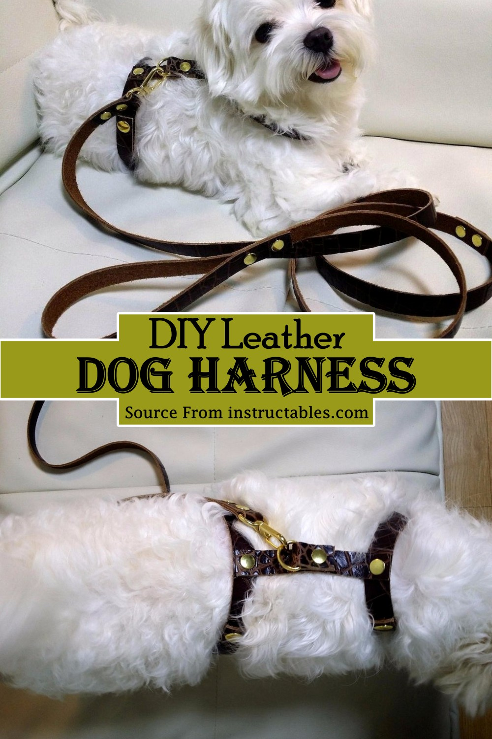 Leather Harness for your pup