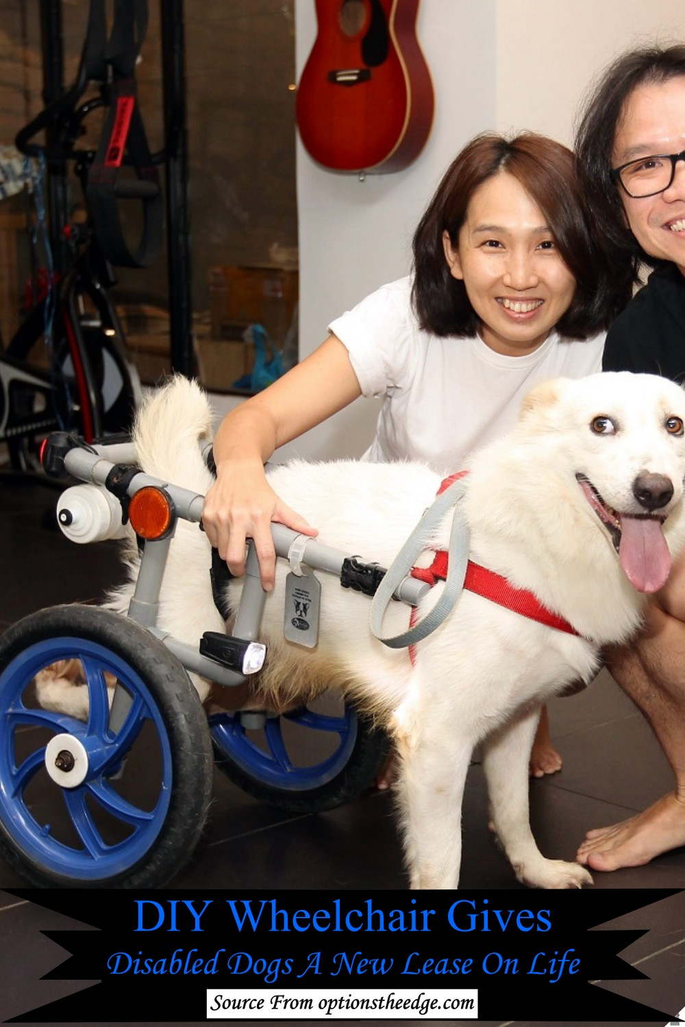 DIY Wheelchair Gives Disabled Dogs A New Lease On Life