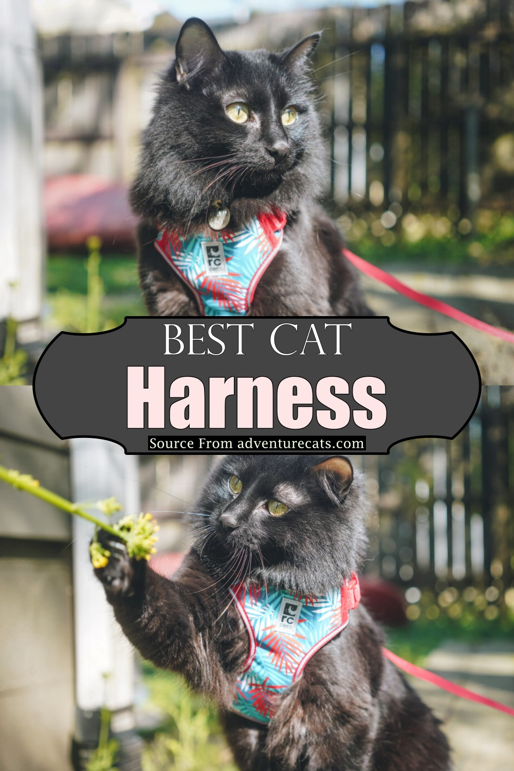 Best neck wrapper for your katie