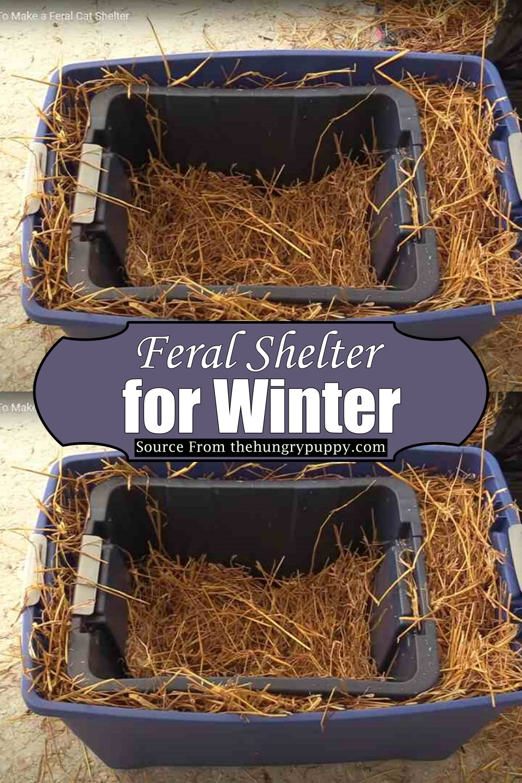 Feral Shelter for Winter