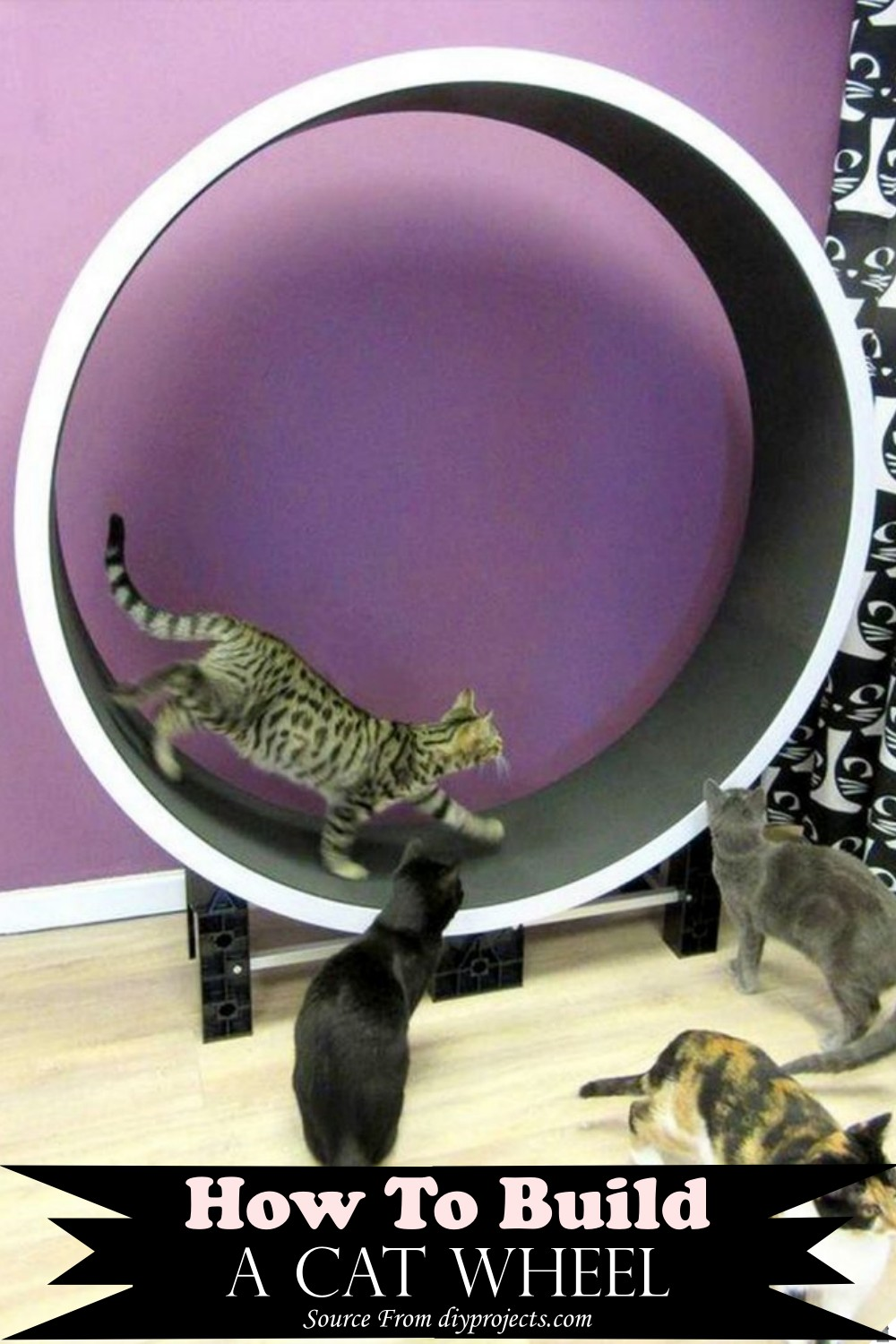 How To Build A exercise opt ion for your kittie indoor