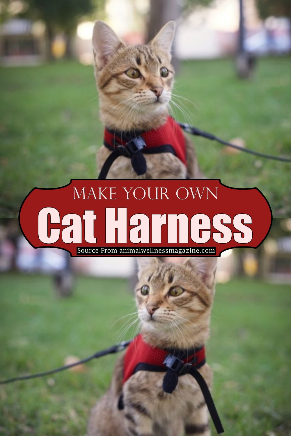 Make Your Own Cat Harness